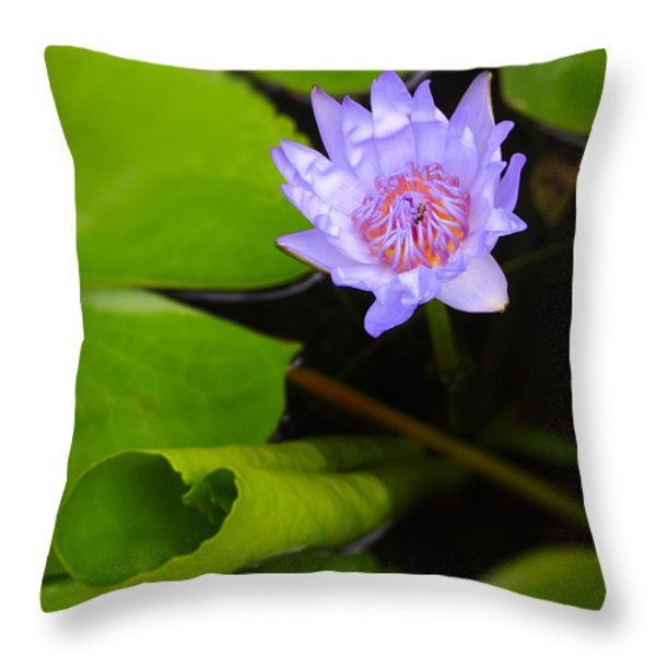Lotus Flower And Lily Pad Throw Pillow by Adam Romanowicz