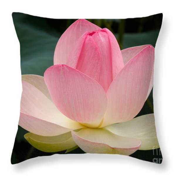 Lotus In Bloom Throw Pillow by Byron Varvarigos
