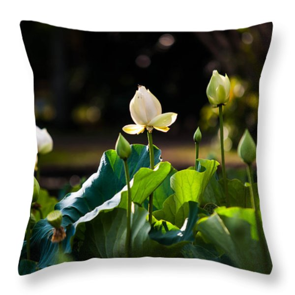 Lotuses In The Evening Light Throw Pillow by Jenny Rainbow