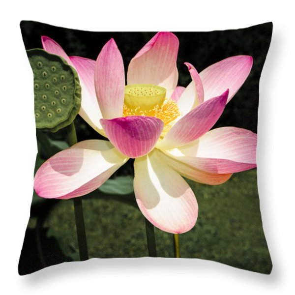 Lovely Lotus Blossom Throw Pillow by Penny Lisowski