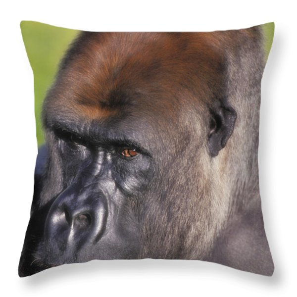 Lowland Gorillaflorida United States Throw Pillow by Thomas Kitchin & Victoria Hurst
