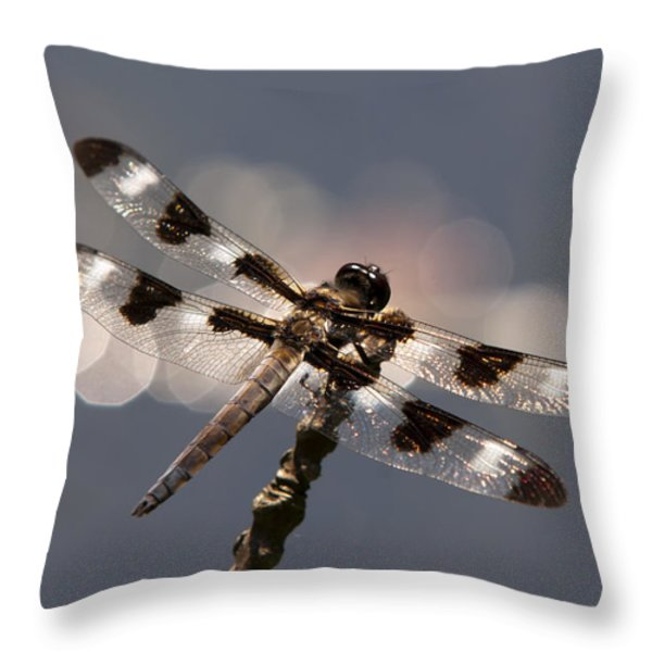 Luminous Dragonfly Throw Pillow by Christina Rollo