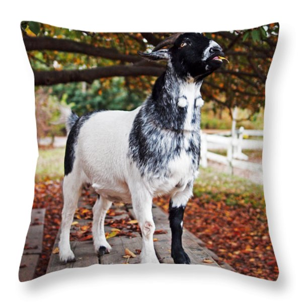 Lunch with Goat Throw Pillow by Rona Black