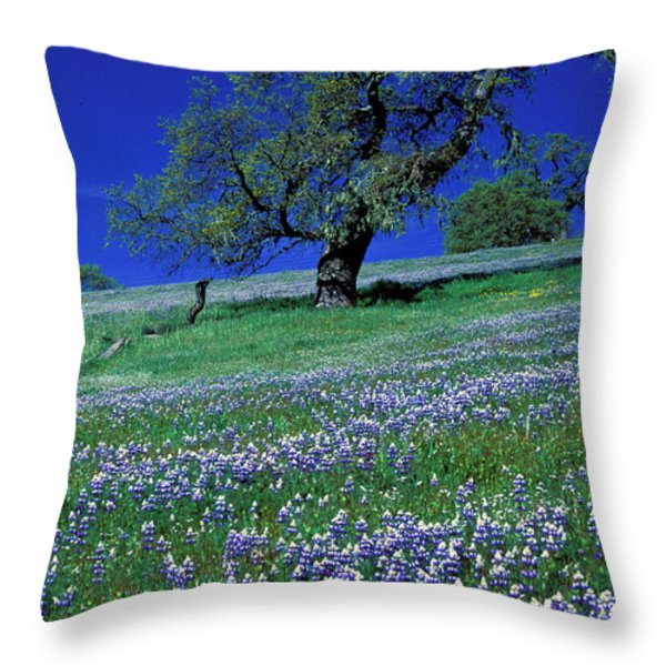 Lupine And The Leaning Tree Throw Pillow by Kathy Yates