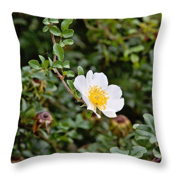 Macartney Rose Throw Pillow by Scott Pellegrin