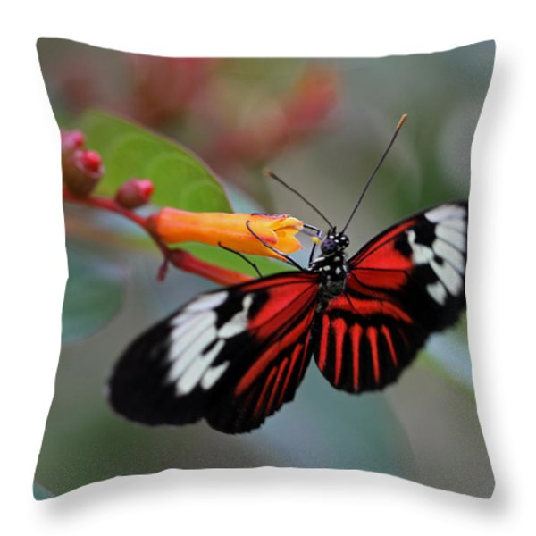 Madiera Butterfly Throw Pillow by Juergen Roth