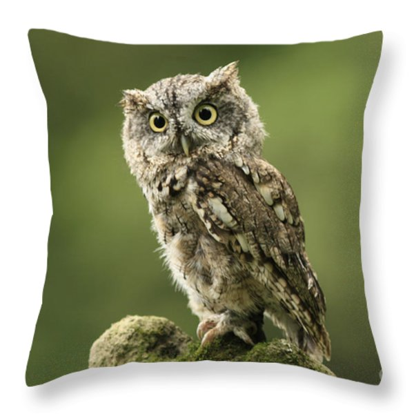 Magnifique  Eastern Screech Owl Throw Pillow by Inspired Nature Photography By Shelley Myke