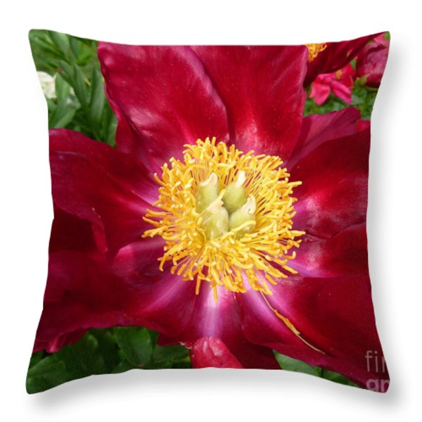Mahogany Peony Throw Pillow by Lingfai Leung