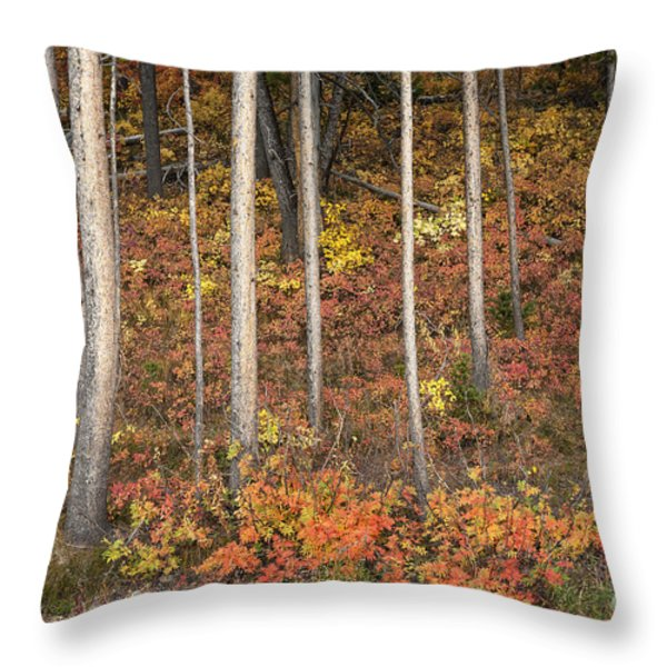 Majestic Autumn In The Grand Tetons Throw Pillow by Sandra Bronstein