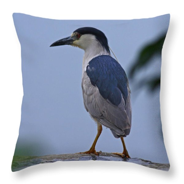 Majestic Black Capped Night Heron At Dusk Throw Pillow by Inspired Nature Photography By Shelley Myke