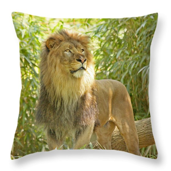 Majestic Throw Pillow by Kim Hojnacki