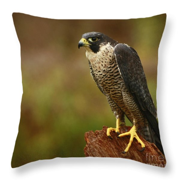 Majestic Peregrine Falcon In The Rain Throw Pillow by Inspired Nature Photography By Shelley Myke