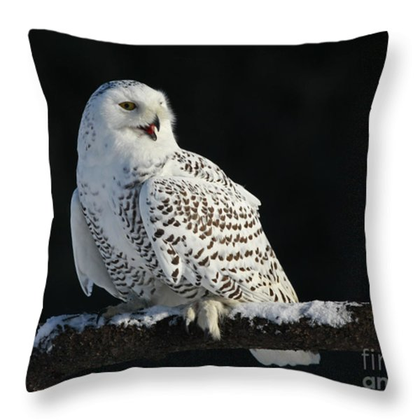 Majestic Whisper - Snowy Owl Throw Pillow by Inspired Nature Photography By Shelley Myke