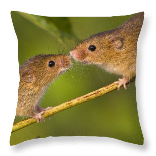 Male And Female Harvest Mice Throw Pillow by Jean-Louis Klein and Marie-Luce Hubert