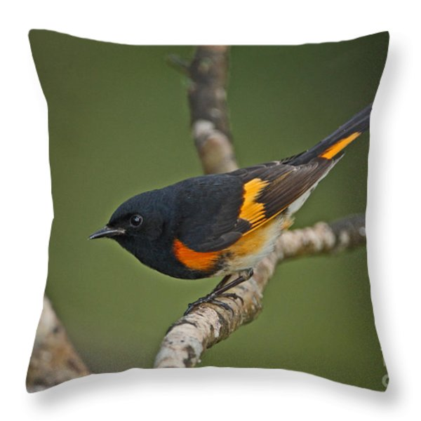 Male American Redstart Throw Pillow by Neil Bowman