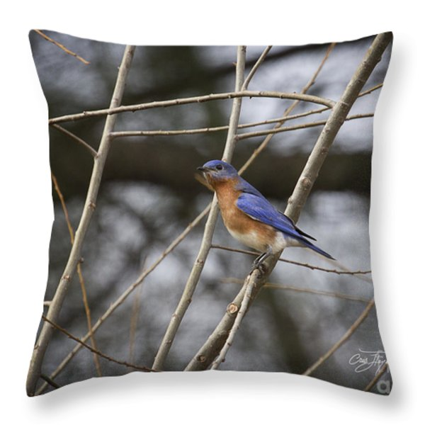 Male Eastern Bluebird Throw Pillow by Cris Hayes