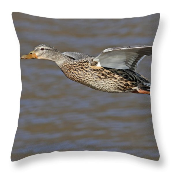 Mallard Fly By Throw Pillow by Jim Nelson
