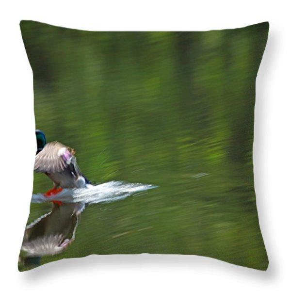 Mallard Splash Down Throw Pillow by Karol Livote