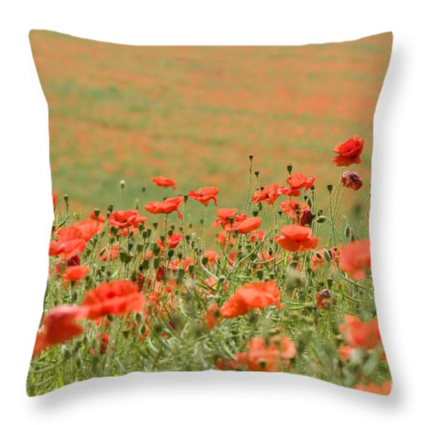 Many Poppies Throw Pillow by Anne Gilbert
