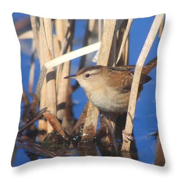 Marsh Wren Throw Pillow by John Burk