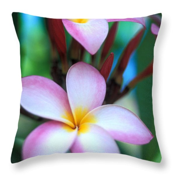 Maui Plumeria Throw Pillow by Kathy Yates