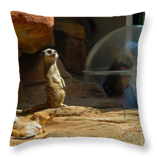 Meerkat Manners Throw Pillow by Amy Cicconi