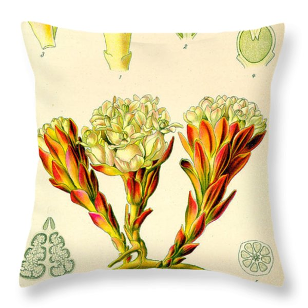 Melera Throw Pillow by Nomad Art And  Design
