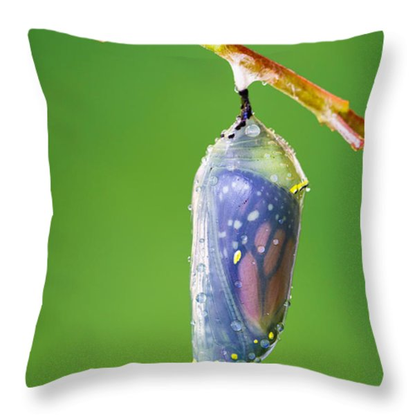 Metamorphosis Throw Pillow by Dawna  Moore Photography