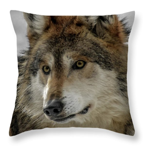 Mexican Grey Wolf Upclose Throw Pillow by Ernie Echols