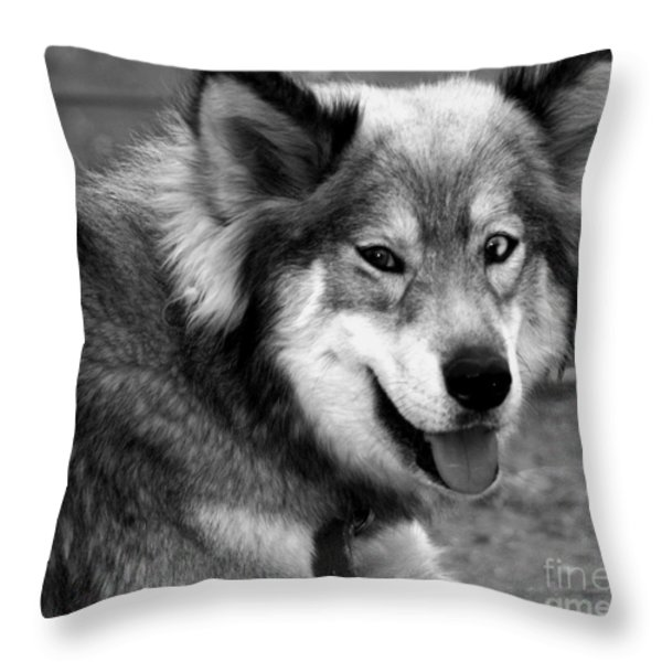 Miley The Husky With Blue and Brown Eyes - Black and White Throw Pillow by Michael Braham