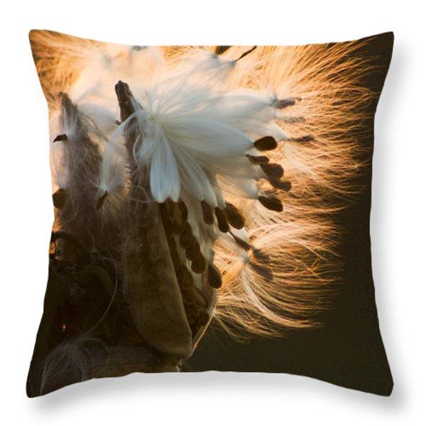 Milkweed Seed Pod Throw Pillow by Adam Romanowicz
