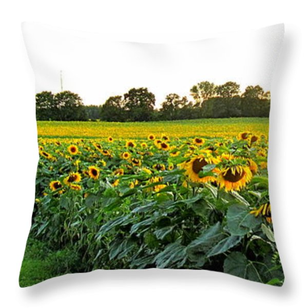 Millions Of Sunflowers Throw Pillow by Danielle  Parent