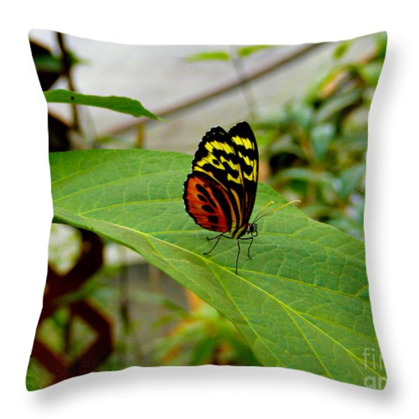 Mindo Butterfly Poses Throw Pillow by Al Bourassa