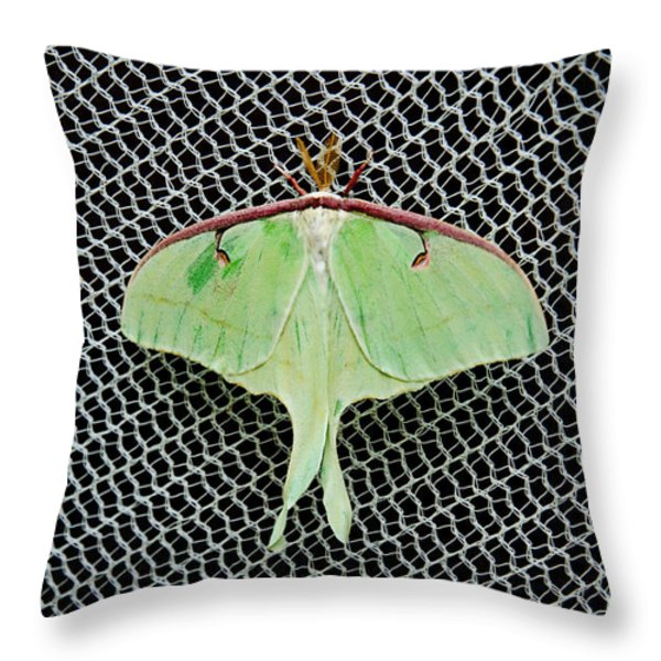 Mint Green Luna Moth Throw Pillow by Andee Design