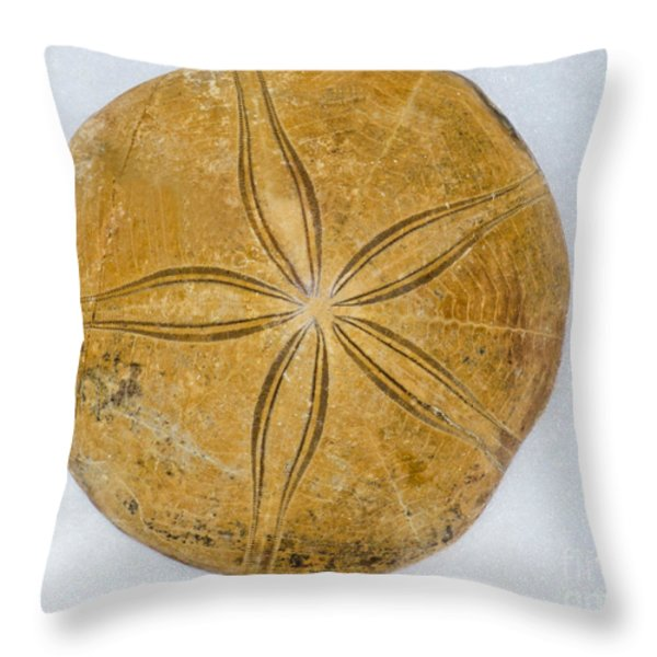 Miocene Sand Dollar Fossil Throw Pillow by Millard H Sharp
