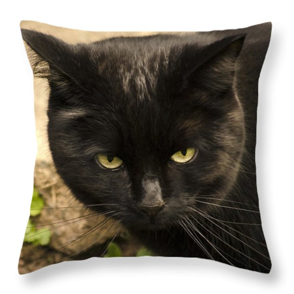 Molly Throw Pillow by Linsey Williams