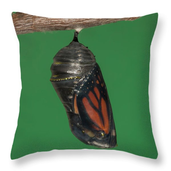 Monarch Butterfly Chrysalis IV Throw Pillow by Clarence Holmes