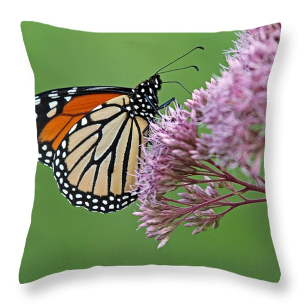 Monarch Butterfly Photography Throw Pillow by Juergen Roth