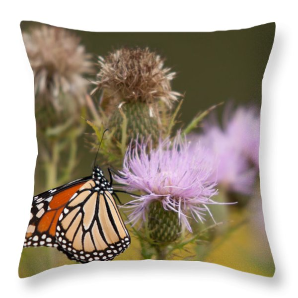 Monarch Throw Pillow by Jim Finch