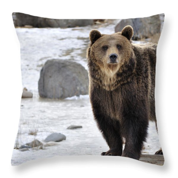 Montana Grizzly  Throw Pillow by Fran Riley