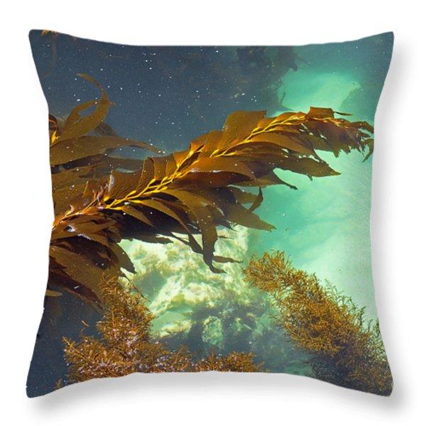 Monterey Bay Seaweed Throw Pillow by Susan Wiedmann