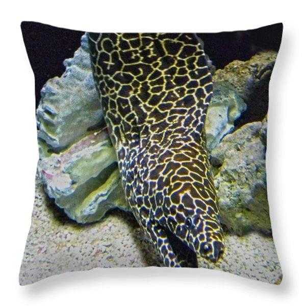 Moray Eel Throw Pillow by Sandi OReilly
