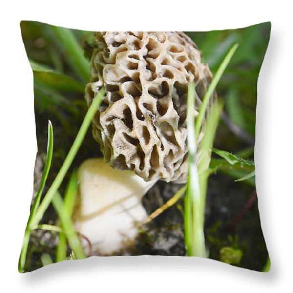 Morchella Esculenta Throw Pillow by Felicia Tica
