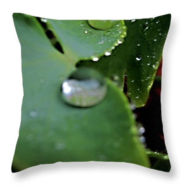 Morning Fresh Leaves With Droplets Throw Pillow by Danielle  Parent
