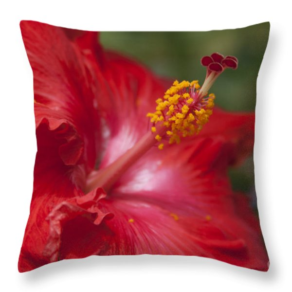 Morning Whispers Throw Pillow by Sharon Mau