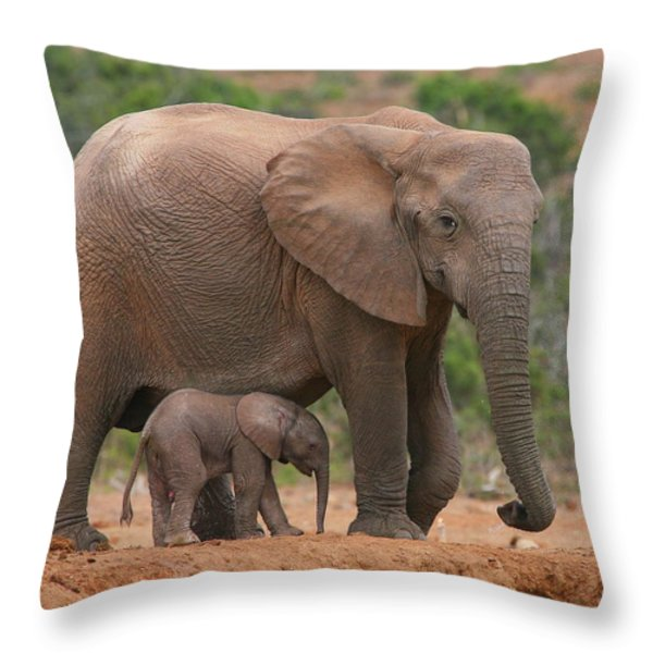 Mother And Calf Throw Pillow by Bruce J Robinson