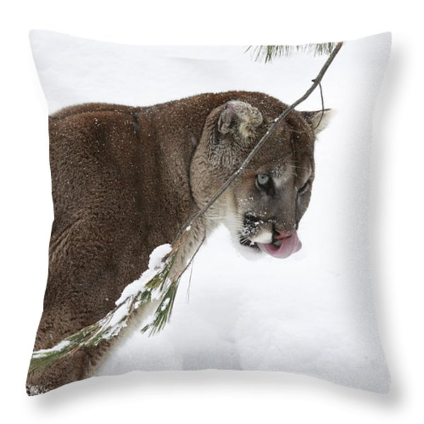 Mountain Lion In A Snow Covered Pine Forest Throw Pillow by Inspired Nature Photography By Shelley Myke
