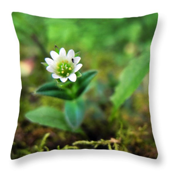Mouse-Ear Chickweed Throw Pillow by Christina Rollo