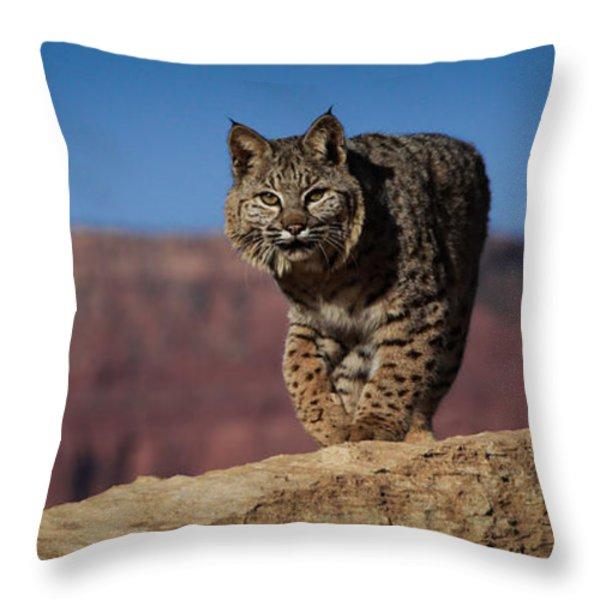 Mr. Bob Cat Throw Pillow by Diane Bohna