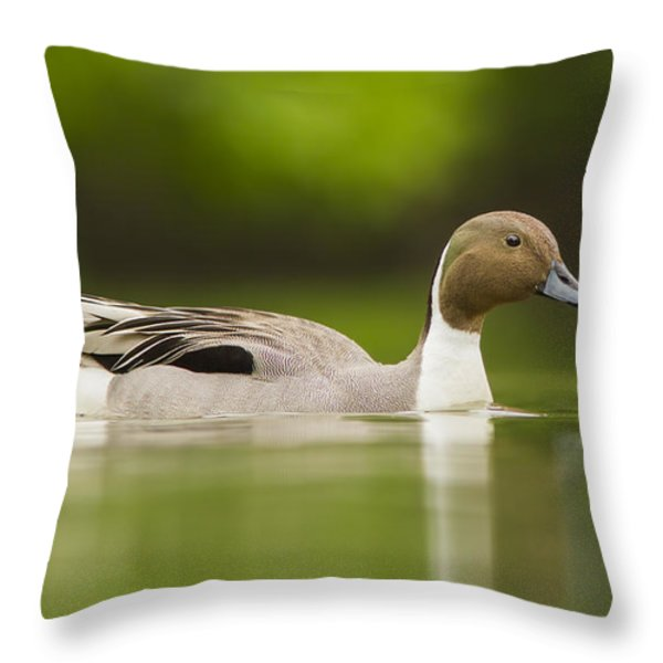 Mr Pintail  Throw Pillow by Mircea Costina Photography